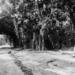 1953: Lemfu: aankomst in Lemfu