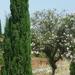 2B Botanische tuin _095