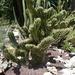 2B Botanische tuin _103