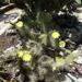 2B Botanische tuin _104