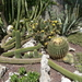 2B Botanische tuin _112