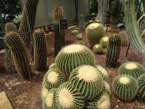 2B Botanische tuin _115
