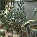 2B Botanische tuin _116