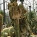 2B Botanische tuin _119