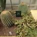2B Botanische tuin _125