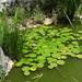 2B Botanische tuin _132