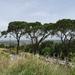 5A CasteldelMonte _DSC00391