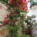 6C Polignano_a_mare _547