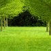 987756-green-orchard