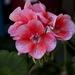 flower-3174425_960_720