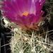 DSC05541Thelocactus bicolor bolaensis