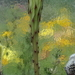 DSC05896Echinopsis