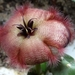 -home-zielono-public_html-media-kunena-attachments-150-DSC02667