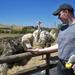 Victor voert vrouwtjes struisvogel