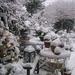72-best-garden-winter-wonderland-images-on-pinterest-winter-gifts
