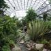 Duthie_Park_-_Winter_Gardens