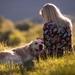 dog-girl-field-mood-1080P-wallpaper