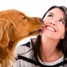 Dogs_White_background_Brown_haired_Smile_Retriever_520777_1280x86