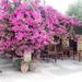 34 cafeneion van Manos  in Maza