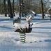 Provinciedomein in de sneeuw 043
