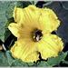 20090822_IMG_0144_Jardins d'Annevoie_Hommel in gele bloem_72