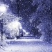 Winter-Wonderland-on-Christmas-photos