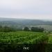 Door de wijngaarden