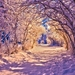 519368_winter-winter-alley-coldness-light-path-trees-nature-woods