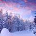 977133_30-snow-tree-wallpapers-pictures_1366x768_h
