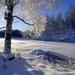 Sweden_snow_tree_wallpaper_1920x1080