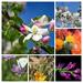 flower-3338743_960_720-COLLAGE