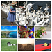 swans-3537873_960_720-COLLAGE
