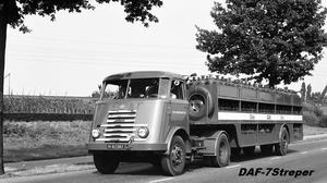 DAF-7Streper