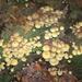Herfst in Gaasterland
