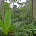 In het regenwoud