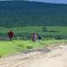 Masai gezinnetje op wandel