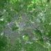 2a De Berlijnse muur _ligging op satelietfoto
