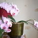 Orchideé
