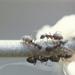 19770000 11 mieren