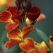 19770000 48 2 bloemen