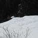 Afdruk van sneeuwschoenen