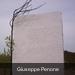 100_0081  Giuseppe Penone