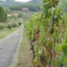 2008_09_05 Montecatini Terme 07 wijngaard
