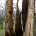2009_03_15 Olloy-sur-Viroin 14