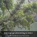 Klimop groeit welig in een afgestorven boom