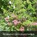 Azalea en gebroken hartjes