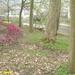 2009_04_12 Petigny 25 Nismes