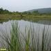 2007_08_10 Rommedenne 8 vijver