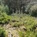 2008_02_10 Romedenne 62