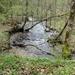 2009_04_19 Honnay 31